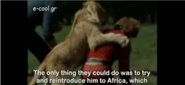 Φίλοι με ένα λιοντάρι!
